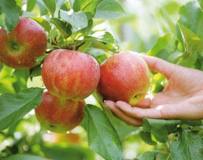 Καλλιέργεια φρούτων με Ενεργούς Μικροοργανισμούς