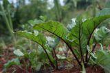 Πώς να χρησιμοποιήσετε τους Ενεργούς Μικροοργανισμούς στα λαχανικά σας