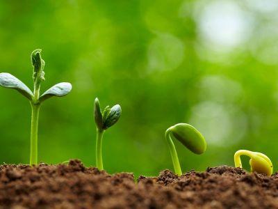 BB MULTIKAL και EMActive: Η μόνη ολοκληρωμένη λύση για την θρέψη και φυτοπροστασία  των φυτών.