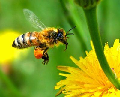 Ο ζεόλιθος και οι μέλισσες