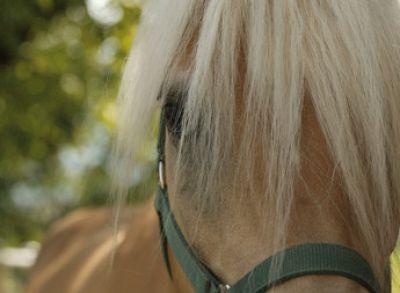 Ο Ζεόλιθος στα Άλογα