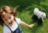 Ο Ζεόλιθος και οι ενεργοί μικροοργανισμοί στα κατοικίδια