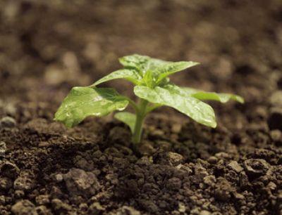 Οι Ενεργοί Μικροοργανισμοί στις καλλιέργειες