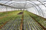 Κλειστές Καλλιέργειες και Θερμοκήπια