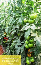 Vital Tricho-p Φυτοπροστατευτικό εδάφους – Ενισχυτικό ριζικού συστήματος.