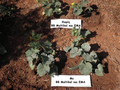ολοκληρωμένη λύση για την θρέψη και φυτοπροστασία  των φυτών.